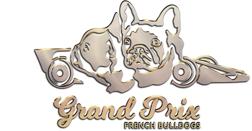 Grand Prix French Bulldogs